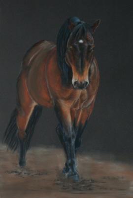 Pferdezeichnung Pastell / Horse drawing in pastel