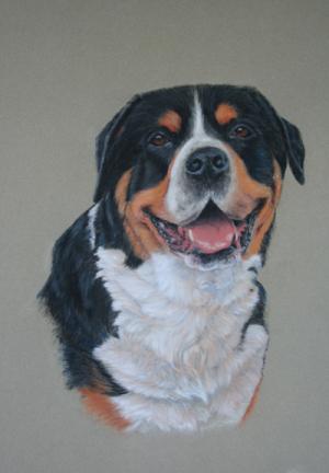 Portraitzeichnung Pastell Großer Schweizer Sennenhund, portrait drawing Large Swiss mountain dog in pastel