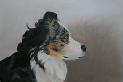 Hundeportrait Australian Shepherd in Pastell / Do portrait australian shepherd in pastel