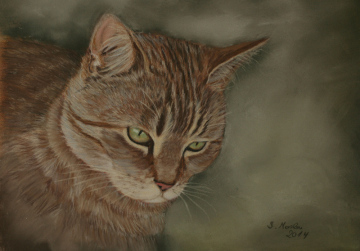 Katzenportrait Pastell Ginger / Cat portrait pastel Ginger
