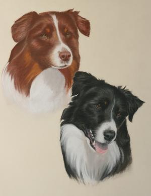 Australian Shepherd Portrait in Pastell / Dog porttrait Australian Shepherd in pastel