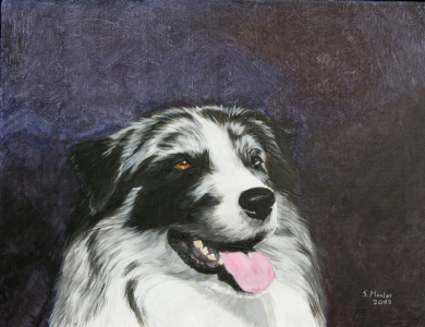 Hundeportrait Australian Shepherd Acryl/ Dog portrait acryl