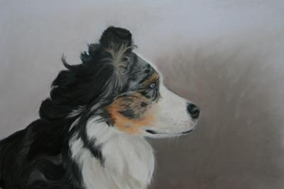 Hundeportrait, Hundezeichnung, dogart, dogportrait
