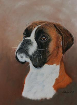 Boxerportrait Pastell