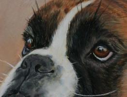 Boxerportrait Pastell Details