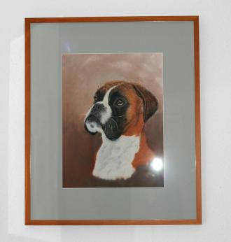Boxerportrait Pastell gerahmt