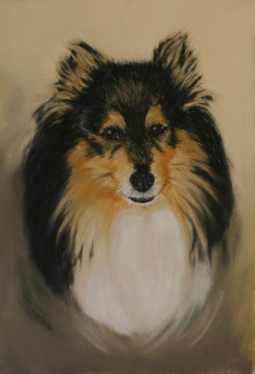 Shetland Sheepdog, Sheltie, Zeichnung, Pastell