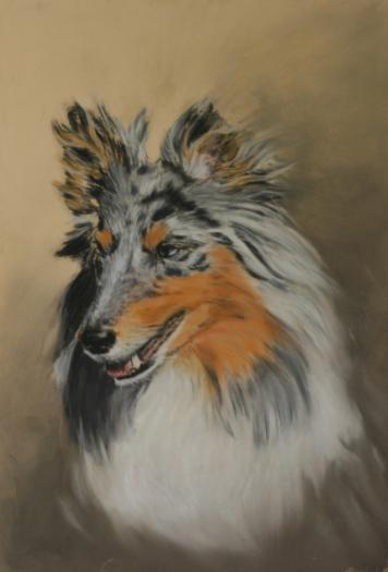 Shetland Sheepdog porttrait, Sheltieportrait, gezeichnet
