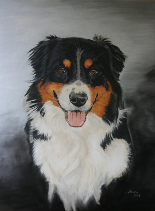 Hundezeichnung, gemaltes Hundeportrait Australian Shepherd