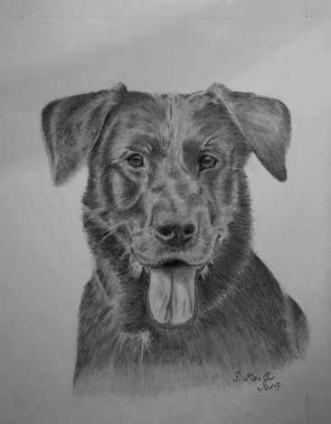 Labradorportrait in Bleistift