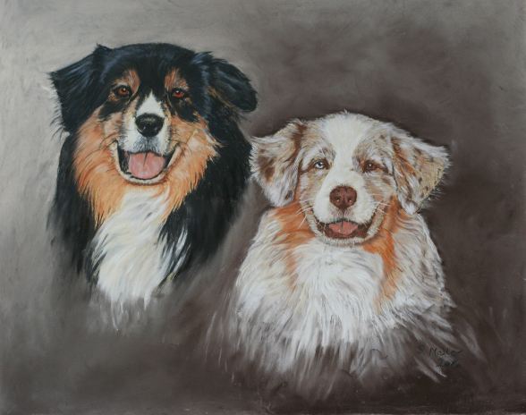 Doppelportrait in Pastell, Australian Shepherds