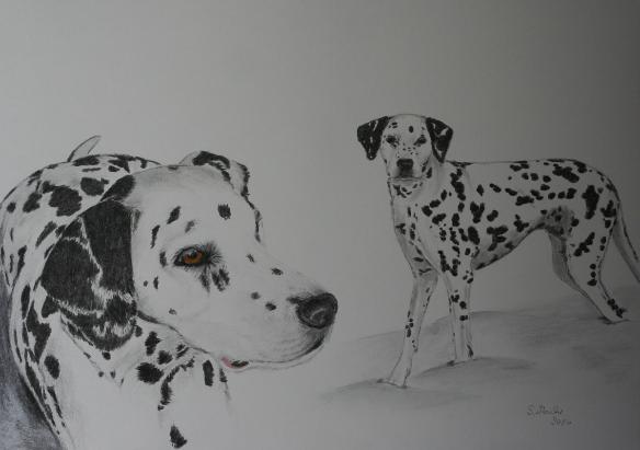 Stella Hundezeichnung Hundeportrait Kohle Graphit