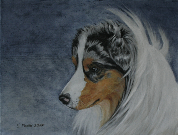 portrait australian shepherd mixed media