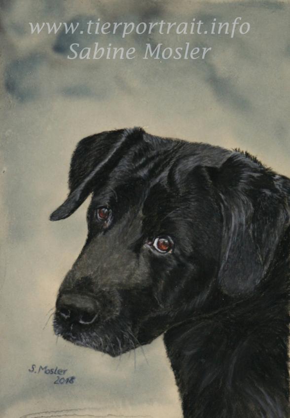 Hundeportrait Hundezeichnung Labrador