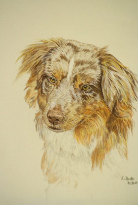 Hundezeichnung, Hundeportrait, Malerei, Künstlerfarbstift, pet portrait