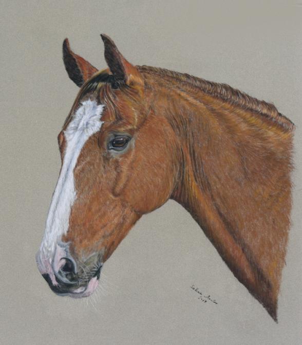 #Pferdeportrait #Pferdezeichnung #Equine Art