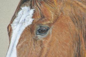 Pferdezeichnung, Pferdeportrait
