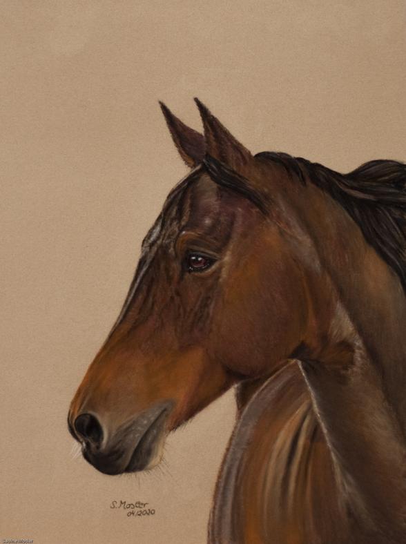 #Pferdeportrait, #Pferdezeichnung, #Pferd